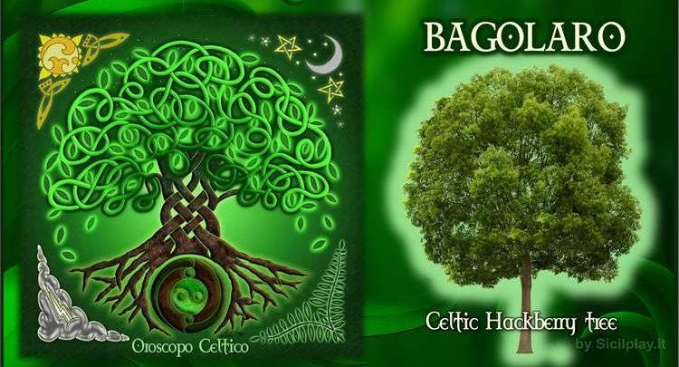 Albero Celtico Bagolaro
