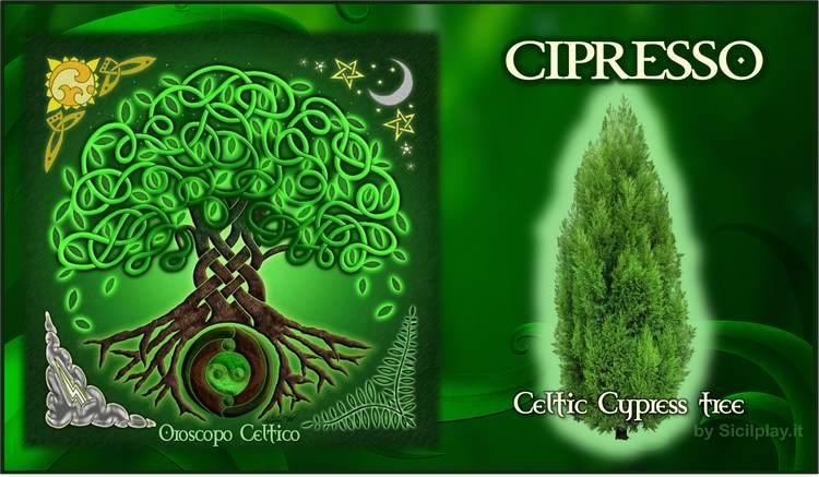 Oroscopo Celtico - segno Cipresso