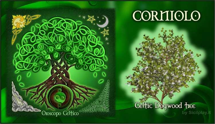 Oroscopo Celtico - Segno Corniolo