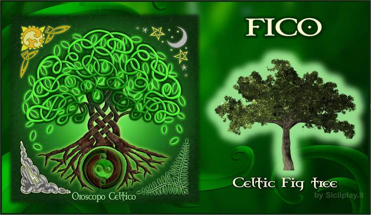 Oroscopo Celtico - Segno Fico
