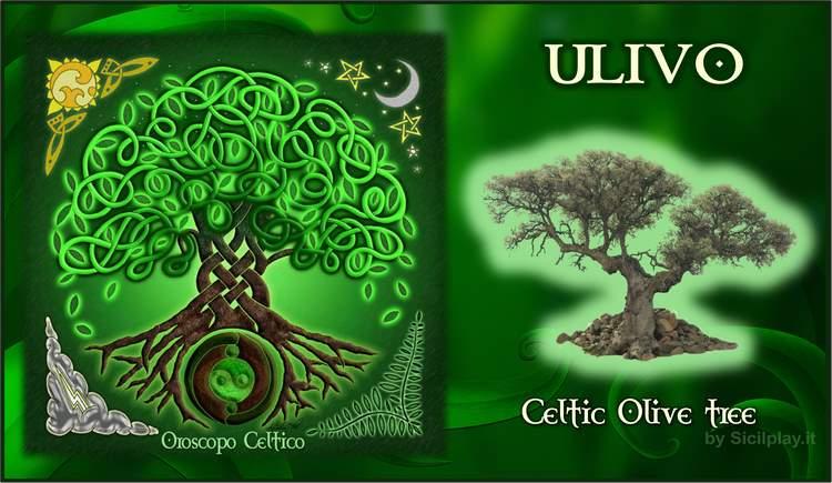 Oroscopo Celtico - Segno Ulivo