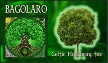 Oroscopo Celtico Bagolaro