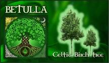 Oroscopo Celtico Betulla