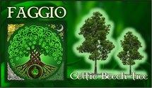 Oroscopo Celtico Faggio
