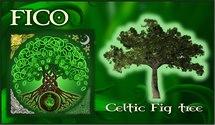 Oroscopo Celtico Fico