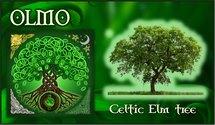 Oroscopo Celtico Olmo