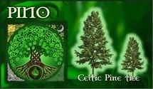 Oroscopo Celtico Pino