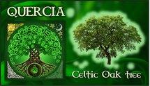 Oroscopo Celtico Quercia